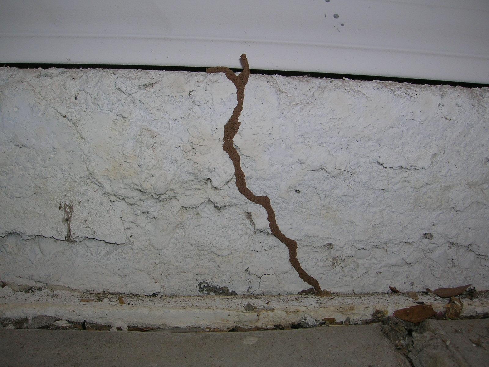 Shelter Tubing Termites Kelowna BC Bugmaster Pest Control Exterminator