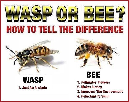 wasp or bee - how to tell the difference