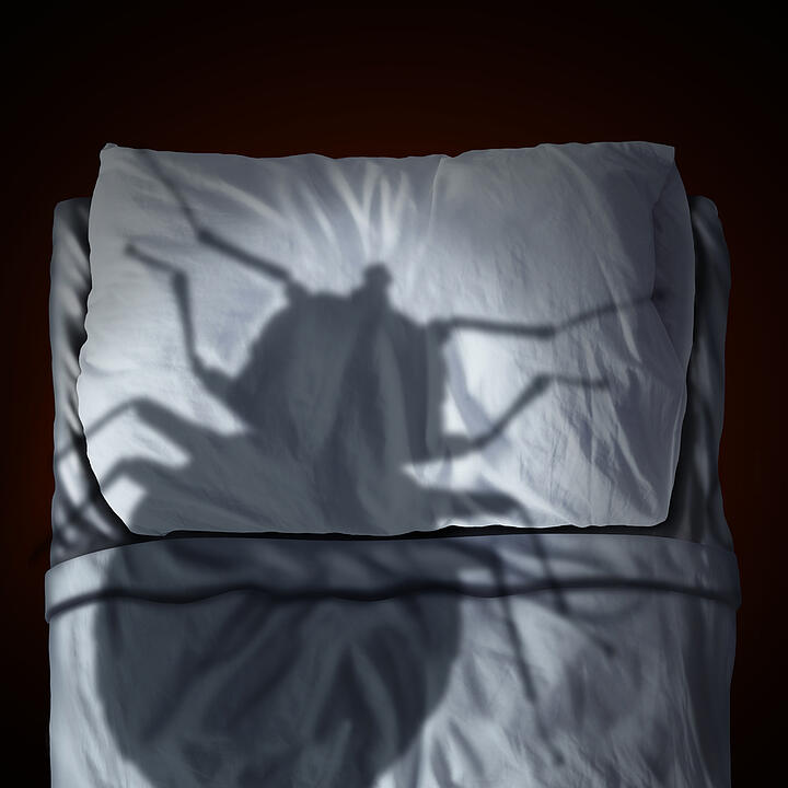 Bed Bug Off – Ridding Your Property of Bed Bugs