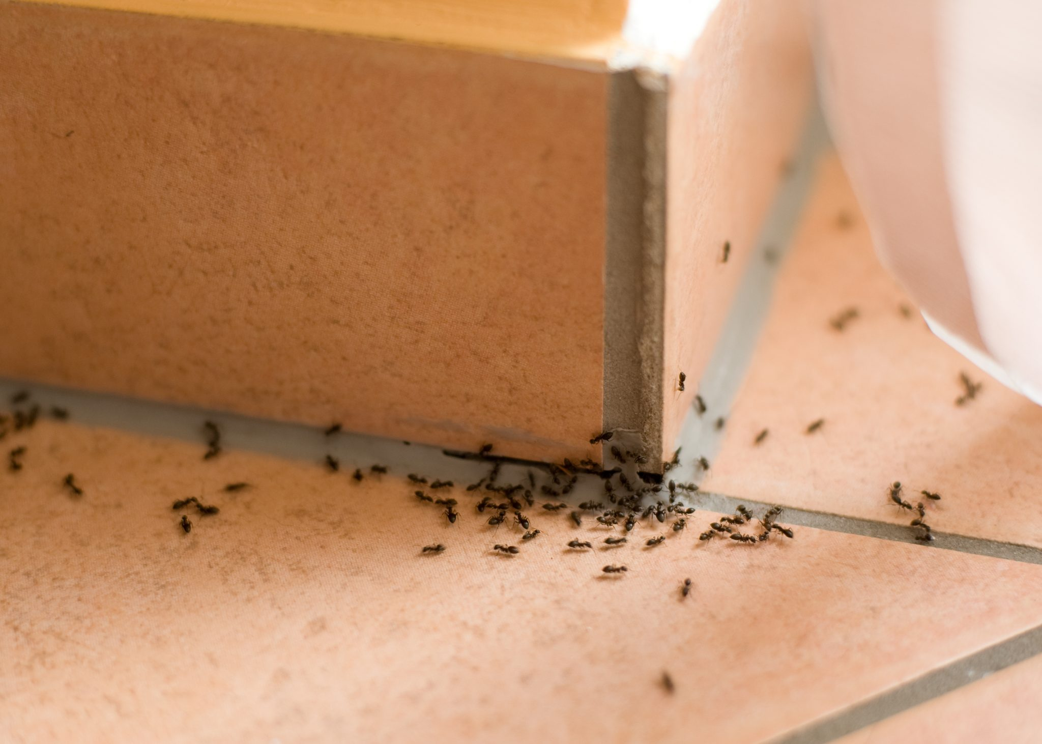 Ant Infestations - How Quick Home Remedies Can Make Your Problem Worse