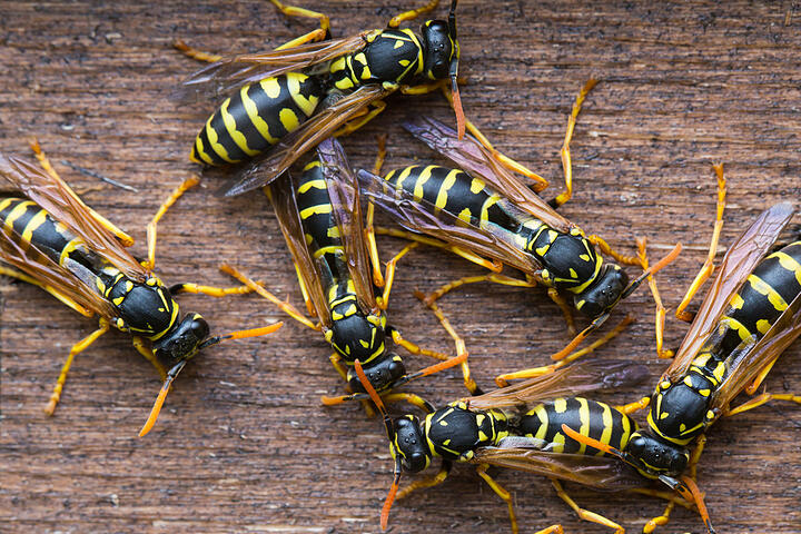 Kiss Your Nest Goodbye: Getting Rid of Wasps