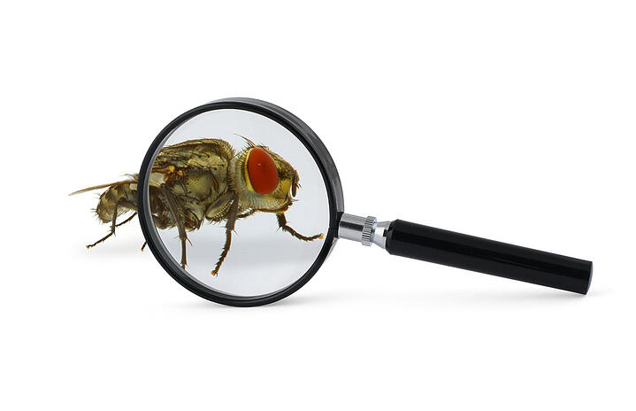 Nip It In The Bug With Our Bug Inspection