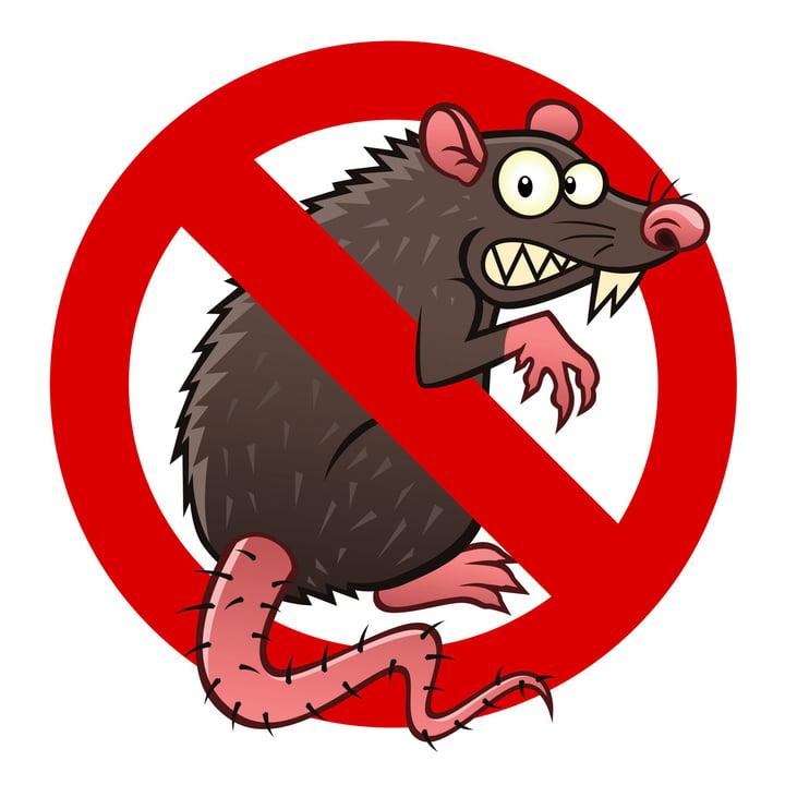 Serial Killer or Cereal Eater: The Rat Dilemma