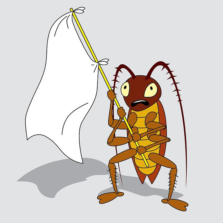 You've Got Bugs. Now What?