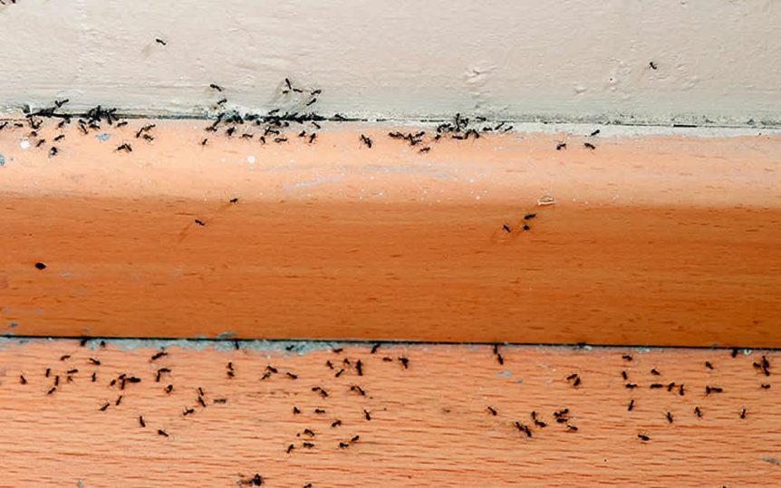 Jan 2019 - Why Ants