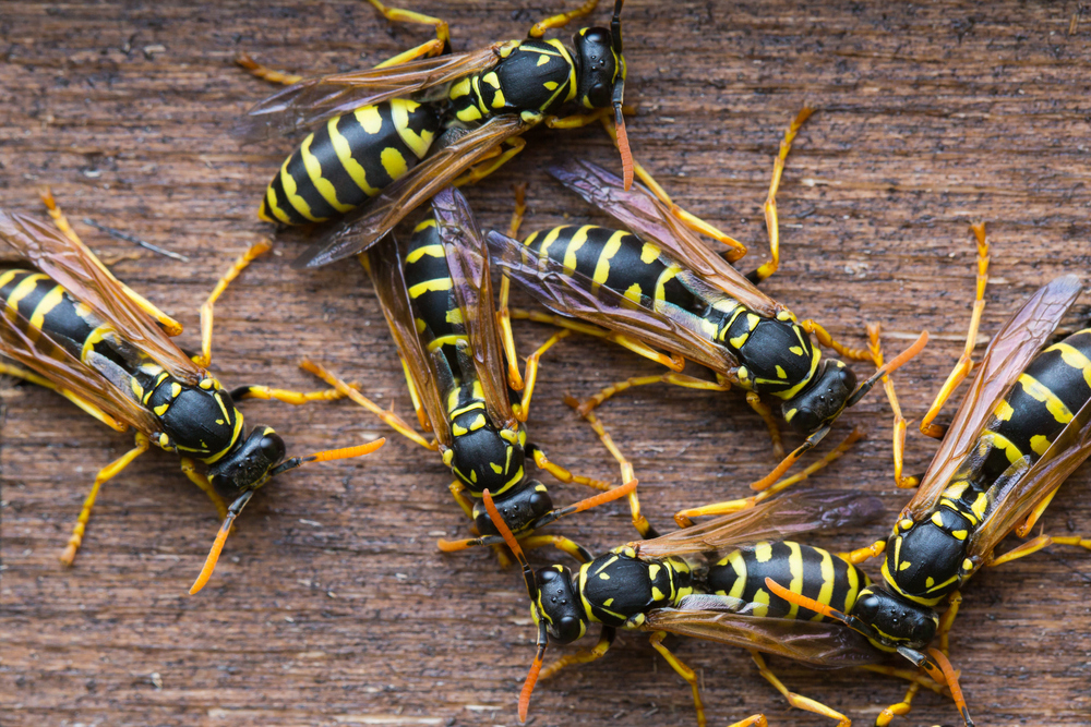 kiss-nest-goodbye-getting-rid-wasps