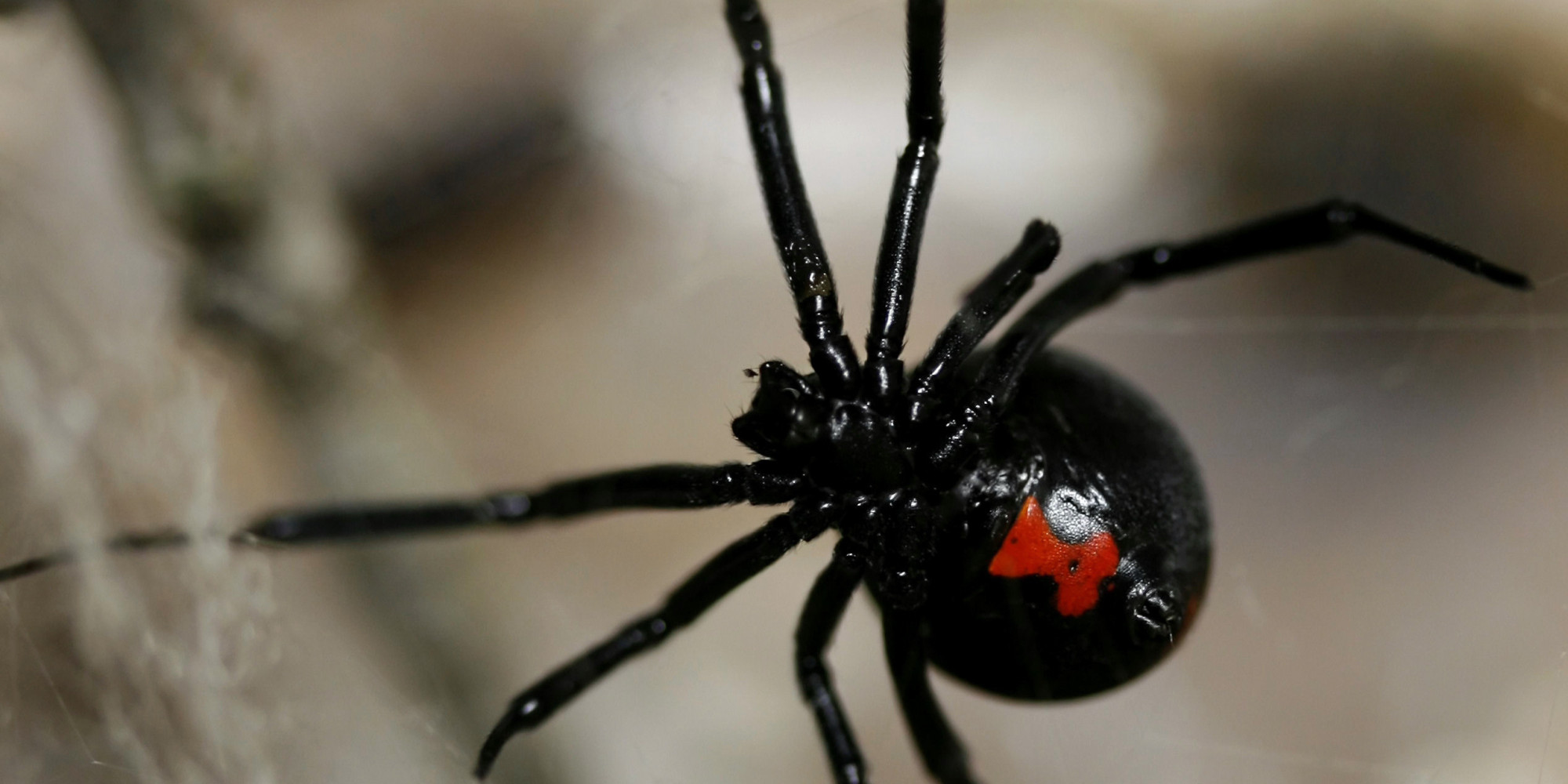 spider-infestations-kelowna-vernon-penticton